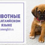 Английский для детей — животные на английском языке