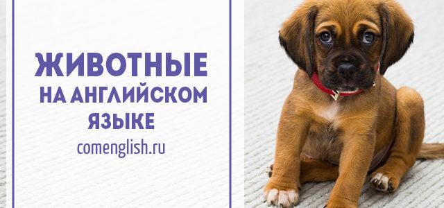 Животные на английском языке. Изучение английского языка с детьми